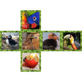Unique Birds V-Cube 2 Puzzle Cube, with Pillowed Sides