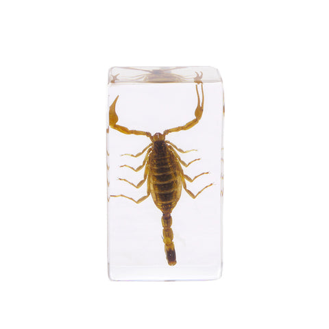 Ambor Scorpion Paperweight - Real Insect Encased in Acrylic 72x40x24
