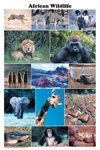 Laminated African Wildlife Poster  24x36 Photo Montage
