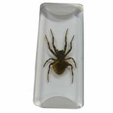 Spider Specimen Acrylic Embedment 2 Inches x 7/8 Inches x 1/4 Inch