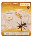 Life Cycle of an Ant - 4 Piece Safariology Set