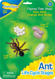 Insect Lore Ant Life Cycle Stages - Set of 4 Figures