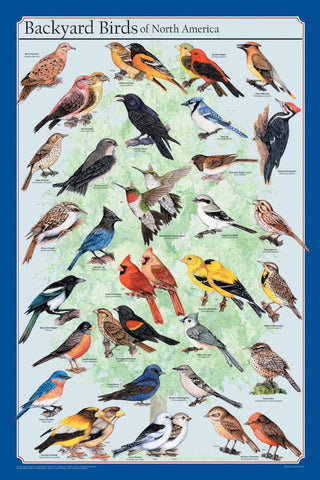 Laminated Backyard Birds Poster-30 Species-24x36 Special Price