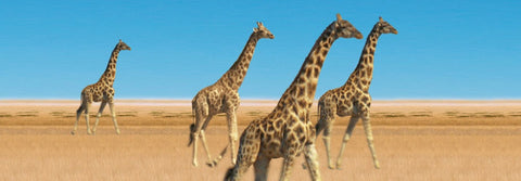 Animated Walking Giraffes 3D Bookmark - Ruler By Emotion Gallery