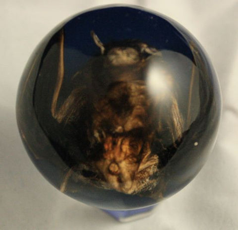 Real Bat Embedment in Medium Acrylic Sphere 2 Inches-Blue