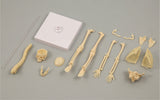 Bone Assembly Kit and Study Guide By Artec