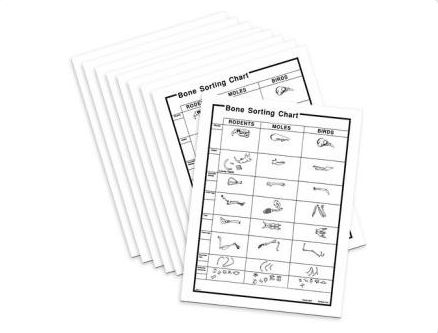 15 Bone Sorting Charts for Owl Pellets