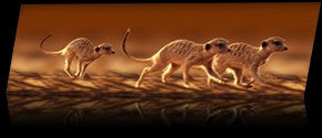 Animated Meerkats Bookmark By Emotion Gallery