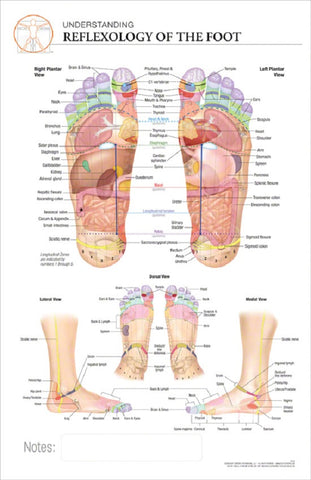 11x17 Post-It Anatomy Poster - The Reflexology of the Foot and Its Corresponding Zones