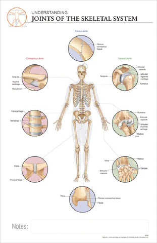 11x17 Post-It Anatomy Poster - The Different Types of Joints of  Human Skeletal