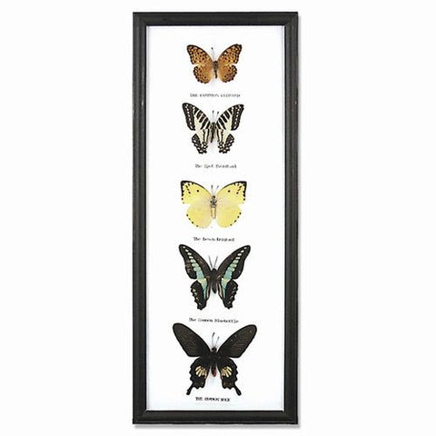 5 Butterfly Specimens on Cotton Back in Wooden Frame