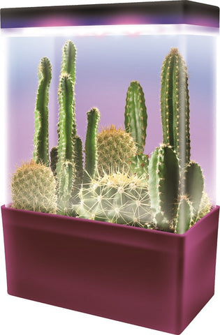 LED Light Cube Mini Cactus Garden - Grow 5 Kinds of Cacti