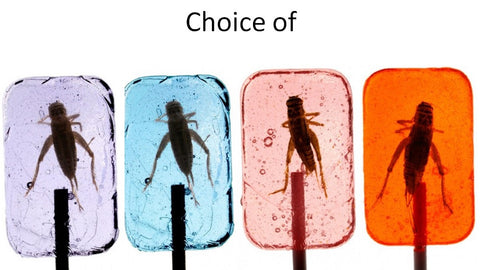 Hotlix Cricket Sucker Pack of 4 Assorted Flavors - Real Insect Bug Candy Lollipops