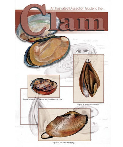 An Illustrated Dissection Guide Book To The Clam David Hall