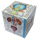 ZooBooKoo Cube Book - Human Body