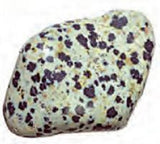 Dalmatian Stone Spotted Rock Tumbled 0.75-1 Inch w Info Card