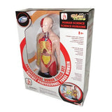 Human Torso Anatomical Model - With Anatomy Education Activities