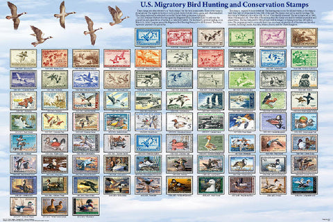 Laminated Duck & Migratory Bird Stamps Poster Chart