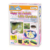 Life Cycles Cubes and Study Guide By Artec