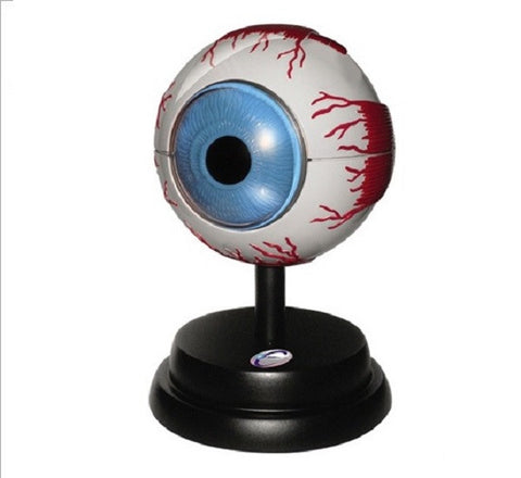 Ophthalmology Education Set with Human Eye Anatomical Model