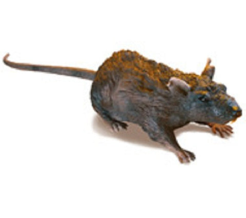 RC Rat - Remote Controlled Crawling Rat
