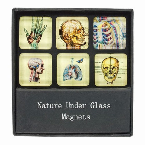 Glass Magnets with Skeleton and Anatomy Prints - Set of 6