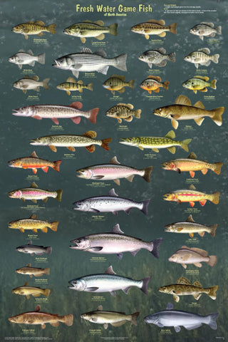 Fresh Water Game Fish Laminated Poster 24x36