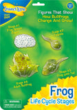 Insect Lore Frog Life Cycle Stages - Set of 4 Figures