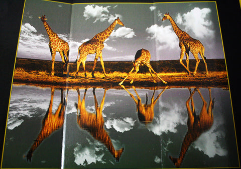 3D Lenticular Puzzle From Steve Bloom Images - Giraffe At The Water Hole (500 Pieces)