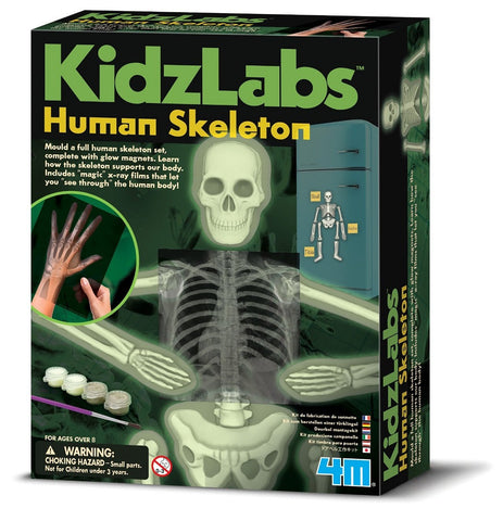 4M KidzLabs Glow Human Skeleton Science Kit