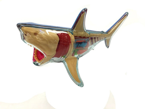 Great White Shark X-Ray Fun Anatomy Kit by 4D Master