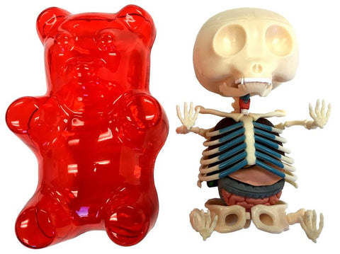 4D Master Red Gummi Bear Skeleton Anatomy Model