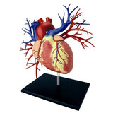 4D DELUXE Human Heart Anatomy Model 3D CutAway Puzzle