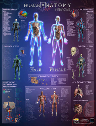Human Anatomy Interactive 3D Poster w/Embeded QR Codes, 42x32 Inches