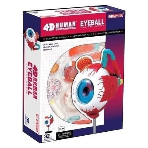 4D Master Human Visible Eyeball Model 3D CutAway Puzzle