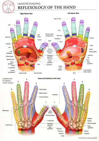 14x20 Anatomy Poster -  The Reflexology of the Hand and Its Corresponding Zones - Online Science Mall