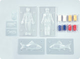 Build Your Own Internal Organs Kit and Study Guide By Artec