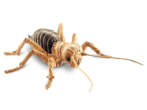 Scurry and Scare Bug Pull-Back Action Jerusalem Cricket by Uncle Milton