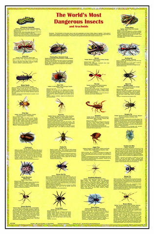 World's Most Dangerous Insects & Arachnids Laminated Poster 38x26""