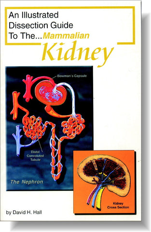 Illustrated Dissection Guide Book to the Mammal Kidney