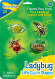 Insect Lore Ladybug Life Cycle Stages - Set of 4 Figures