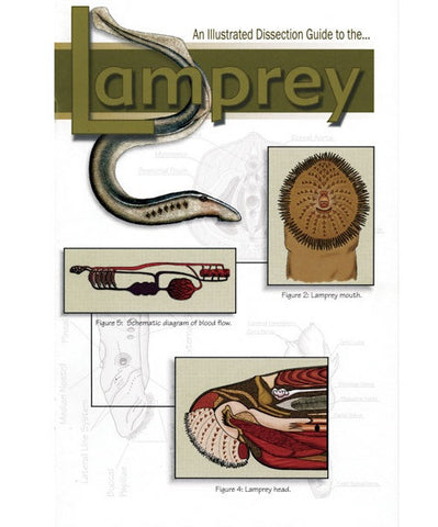 Illustrated Dissection Guide Book To Lamprey