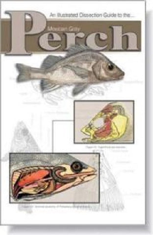 Illustrated Dissection Guide Book to the Perch by Peter Reinthal