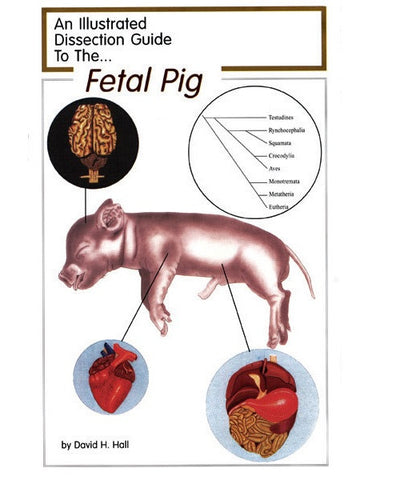 Illustrated Dissection Guide Book to the Pig, David Hall Fetal