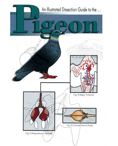 Illustrated Dissection Guide Book to the Pigeon
