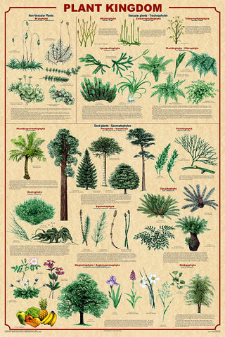 Plant Kingdom  Poster 24x36  With New Classifications v.2