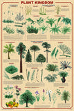 Laminated Plant Kingdom Poster 24x36 With New Classifications v.2