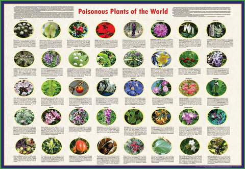 Poisonous Plants of the World - Laminated Poster 38x26""