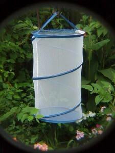 12 Inch Tall Pop-Up Butterfly Cage Butterflies / Insects - Online Science Mall