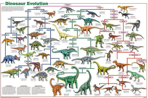Laminated Dinosaur Evolution Poster 24x36